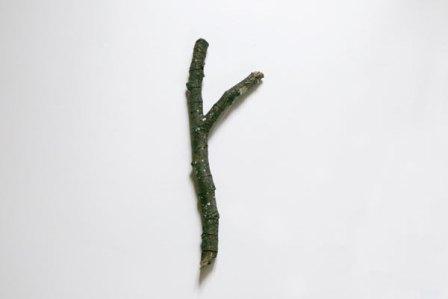 arbre-tronc