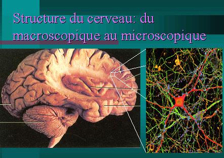 Voyage dans le cerveau